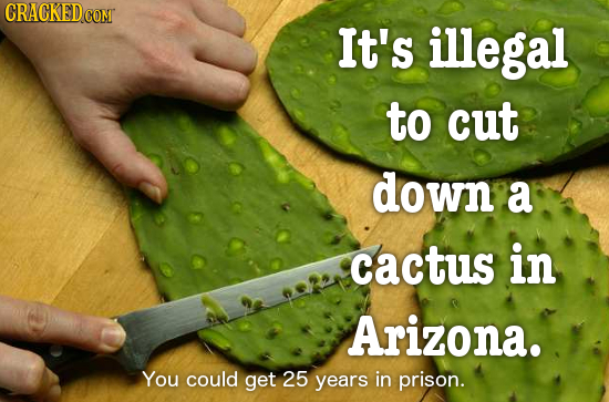 CRACKED COM It's illegal to cut down a Cactus in Arizona. You could get 25 years in prison.