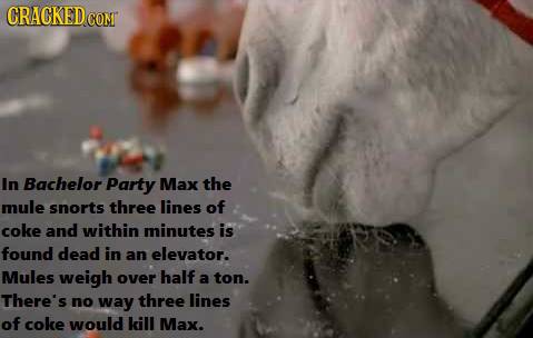 CRACKED CoNT In Bachelor Party Max the mule snorts three lines of coke and within minutes is found dead in an elevator. Mules weigh over half a ton. T