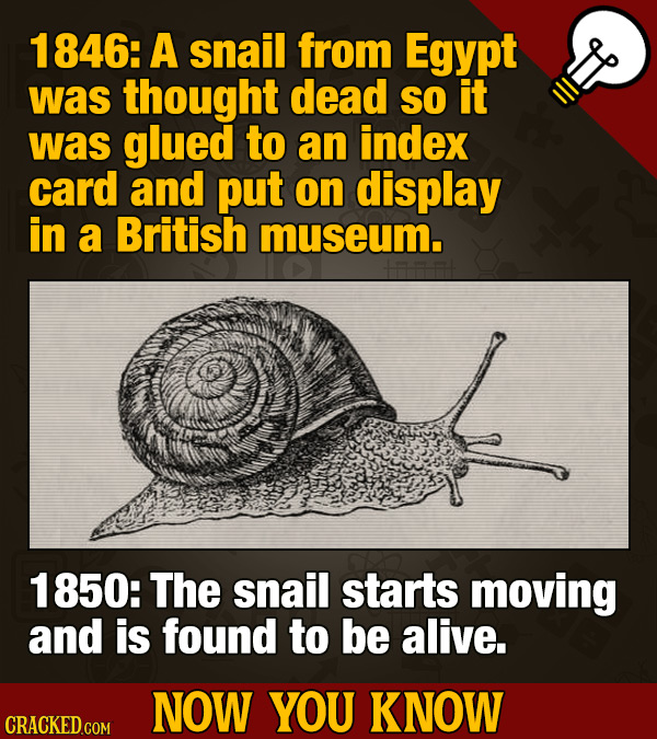 1846: A snail from Egypt was thought dead SO it was glued to an index card and put on display in a British museum. 1 850: The snail starts moving and