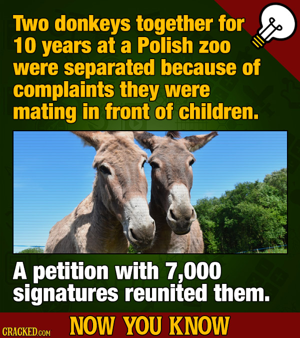 Two donkeys together for 10 years at a Polish ZOO were separated because of complaints they were mating in front of children. A petition with 7, O00 s