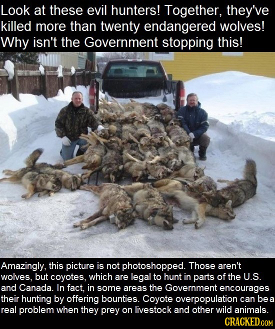Look at these evil hunters! Together, they've killed more than twenty endangered wolves! Why isn't the Government stopping this! Amazingly, this pictu