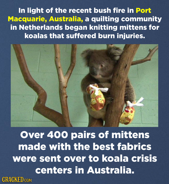 In light of the recent bush fire in Port Macquarie, Australia, a quilting community in Netherlands began knitting mittens for koalas that suffered bur