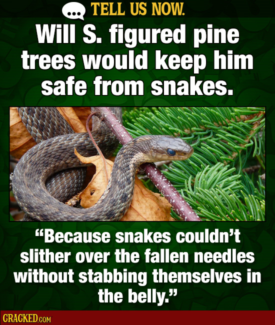 TELL US NOW. Will S. figured pine trees would keep him safe from snakes. Because snakes couldn't slither over the fallen needles without stabbing the