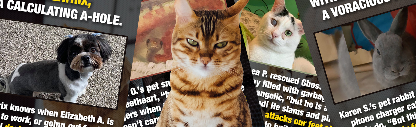 Tell Us Now: Jerk Moves Our Pets Are Pulling Right Now