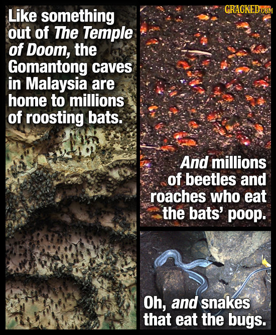 Like something out of The Temple of Doom, the Gomantong caves in Malaysia are home to millions of roosting bats. And millions of beetles and roaches w