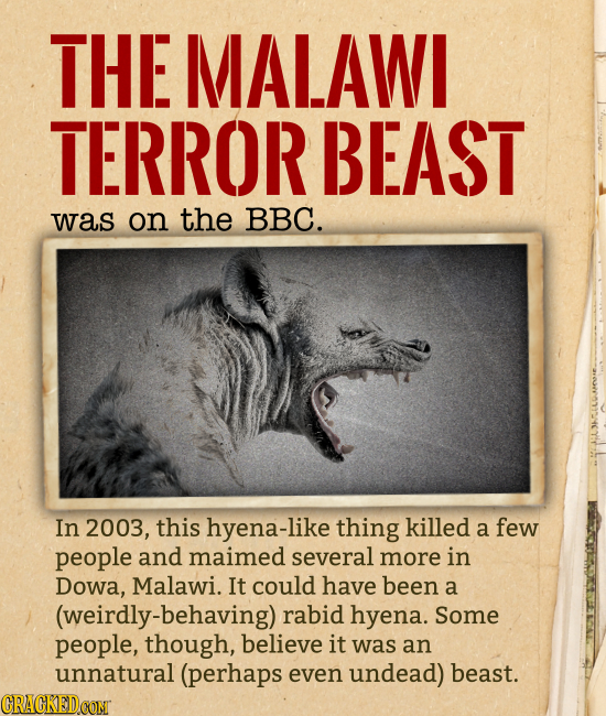 THE MALAWI TERROR BEAST was on the BBC. In 2003, this hyena-like thing killed a few people and maimed several more in Dowa, Malawi. It could have been