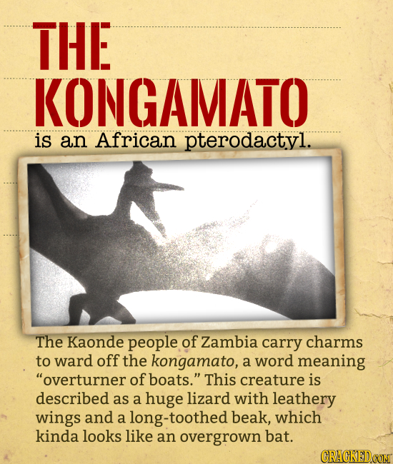 THE KONGAMATO is an African pterodactyl. The Kaonde people of Zambia carry charms to ward off the kongamato, a word meaning overturner of boats. Thi