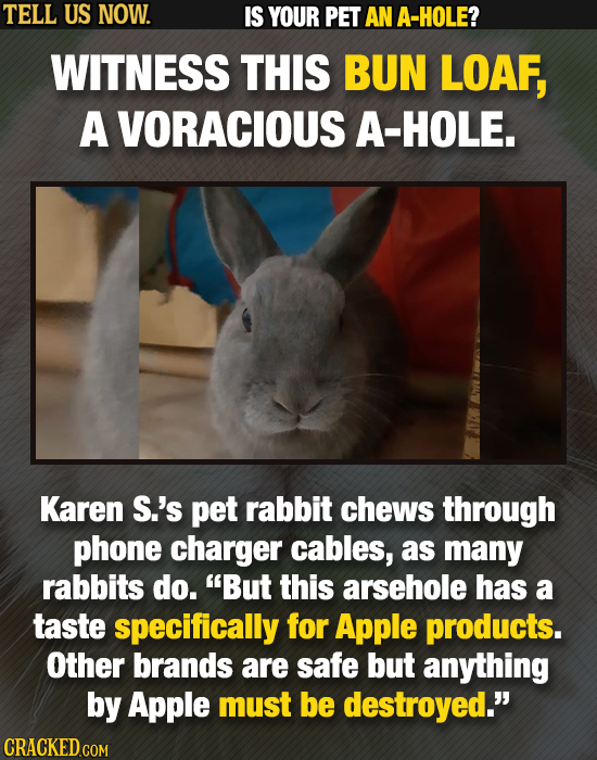 TELL US NOW. IS YOUR PET AN A-HOLE? WITNESS THIS BUN LOAF, A VORACIOUS A-HOLE. Karen S.'s pet rabbit chews through phone charger cables, as many rabbi