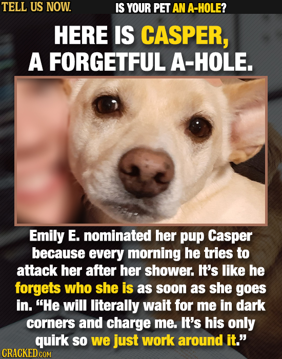 TELL US NOW. IS YOUR PET AN A-HOLE? HERE IS CASPER, A FORGETFUL A-HOLE. Emily E. nominated her pup Casper because every morning he tries To attack her