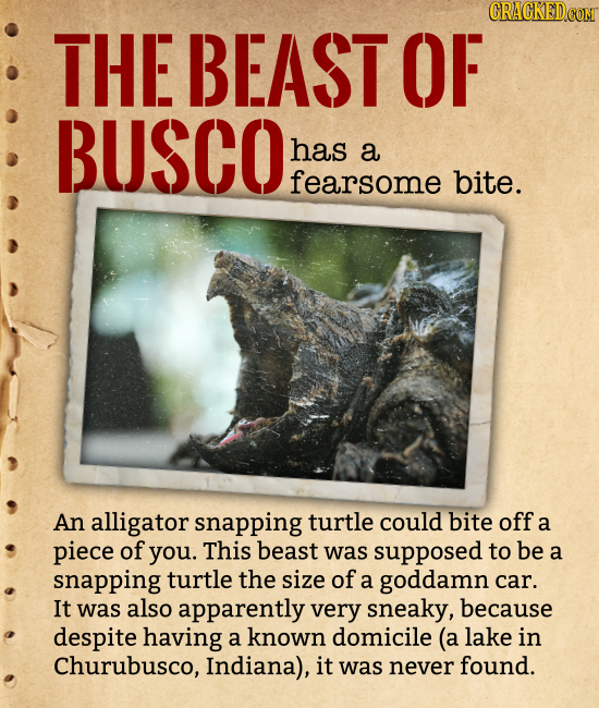 THE BEAST OF BUSCO has a fearsome bite. An alligator snapping turtle could bite off a piece of you. This beast was supposed to be a snapping turtle th