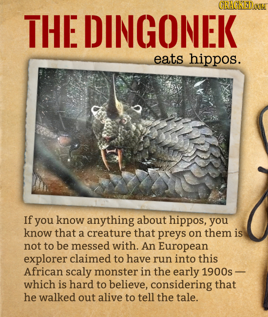 THE DINGONEK eats hippos. If you know anything about hippos, you know that a creature that preys on them is not to be messed with. An Eur