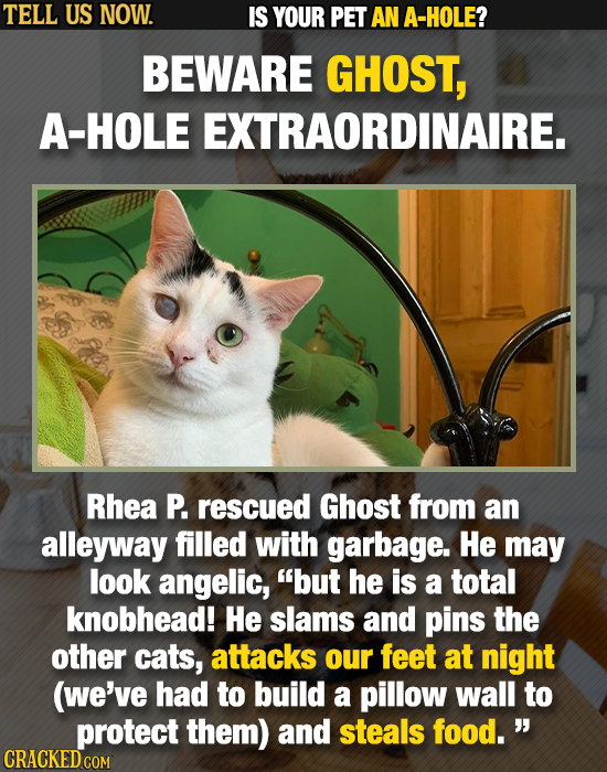 TELL US NOW. IS YOUR PET AN A-HOLE? BEWARE GHOST, A-HOLE EXTRAORDINAIRE. Rhea P. rescued Ghost from an alleyway filled with garbage. He may look angel