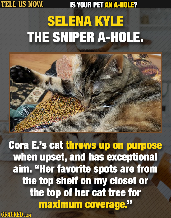 TELL US NOW. IS YOUR PET AN A-HOLE? SELENA KYLE THE SNIPER A-HOLE. Cora E.'s cat throws up on purpose when upset, and has exceptional aim. Her favori