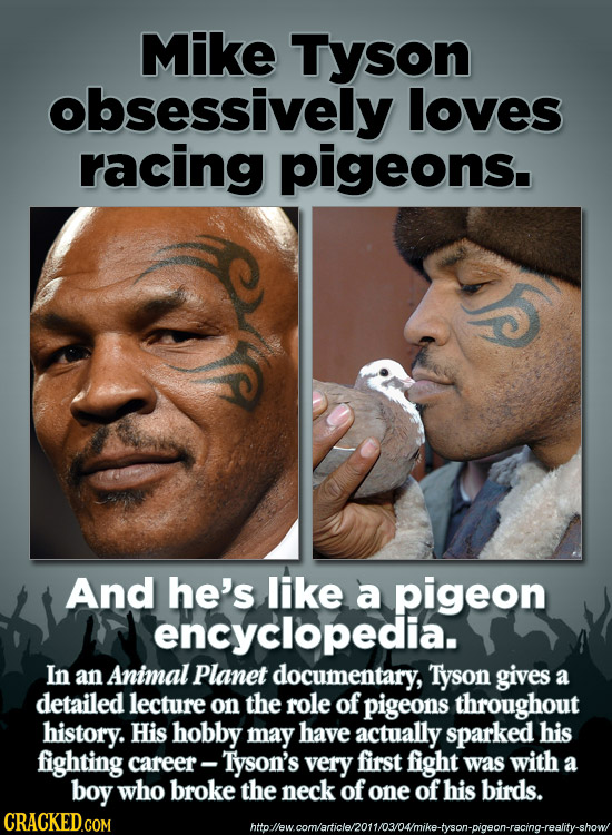Mike Tyson obsessively loves racing pigeons. And he's like a pigeon encyclopedia. In an Animal Planet documentary, Tyson gives a detailed lecture on t
