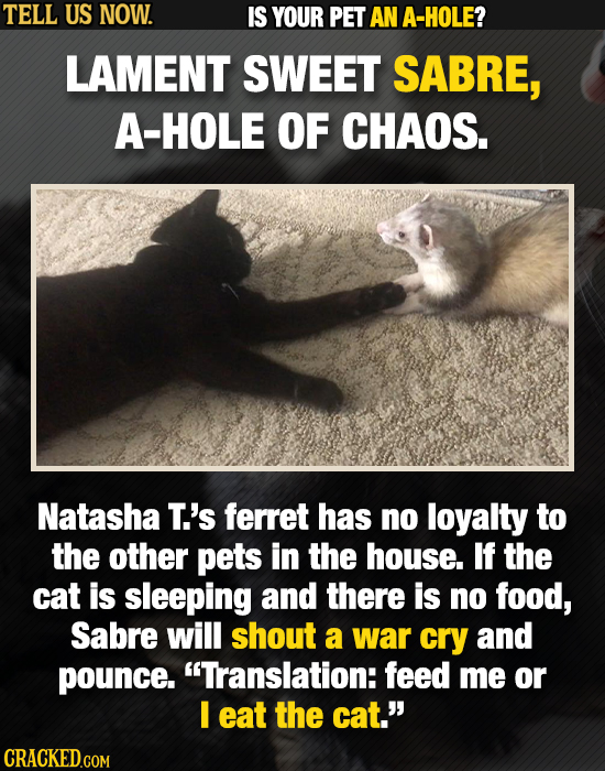 TELL US NOW. IS YOUR PET AN A-HOLE? LAMENT SWEET SABRE, A-HOLE OF CHAOS. Natasha T.'s ferret has no loyalty to the other pets in the house. If the cat