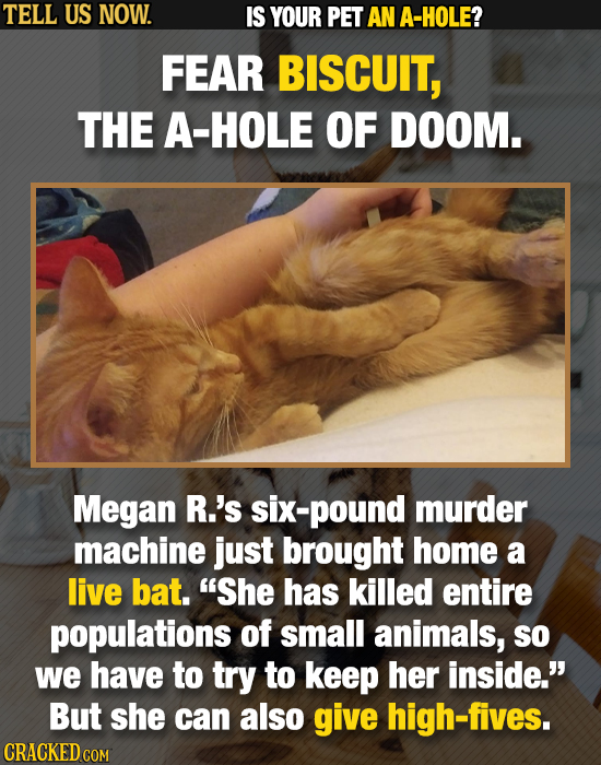 TELL US NOW. IS YOUR PET AN A-HOLE? FEAR BISCUIT, THE A-HOLE OF DOOM. Megan R.'s six-pound murder machine just brought home a live bat. She has kille