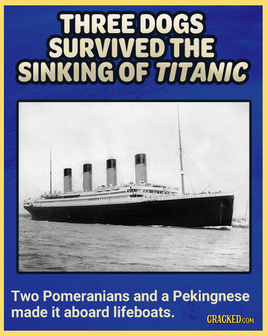 THREE DOGS SURVIVED THE SINKING OF TITANIC Two Pomeranians and a Pekingnese made it aboard lifeboats. CRACKED CON