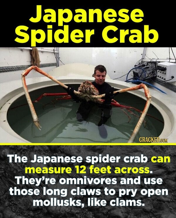 19 Terrifying Real-World Monsters You Won't Believe Exist - The Japanese spider crab can measure 12 feet across. They're omnivores and use those long