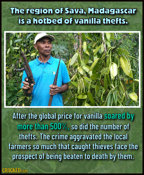 The region of Sava, Madagascar is a hotbed of vanilla thefts. After the global price for vanilla soared by more than 500%, So did the number of thefts