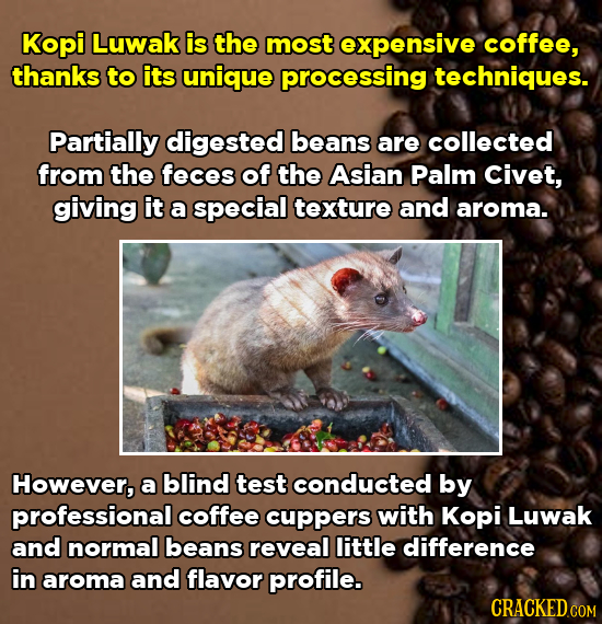 Kopi Luwak is the most expensive coffee, thanks to its unique processing techniques. Partially digested beans are collected from the feces of the Asia