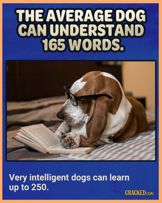 THE AVERAGE DOG CAN UNDERSTAND 165 WORDS. Very intelligent dogs can learn up to 250. CRACKED COM