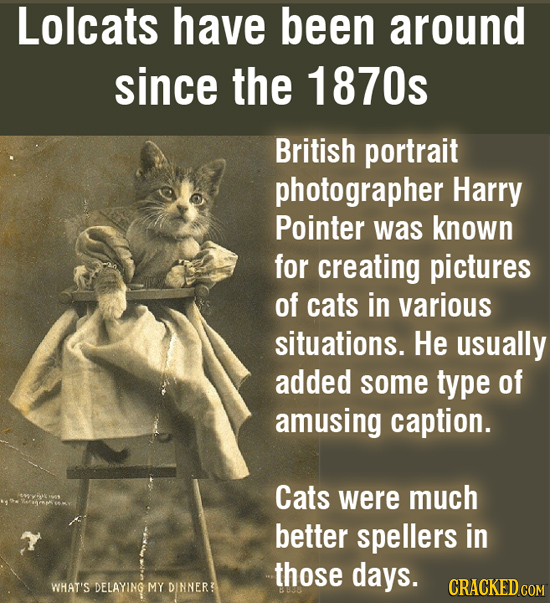 Lolcats have been around since the 1870s British portrait photographer Harry Pointer was known for creating pictures of cats in various situations. He