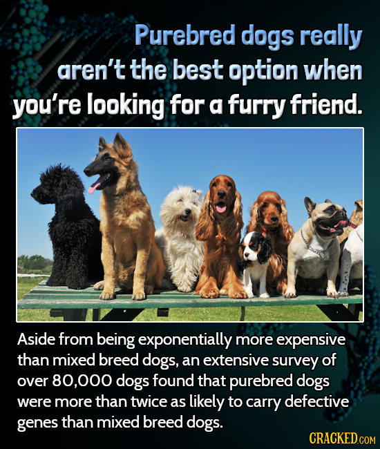 Purebred dogs really aren't the best option when you're looking for a furry friend. Aside from being exponentially more expensive than mixed breed dog
