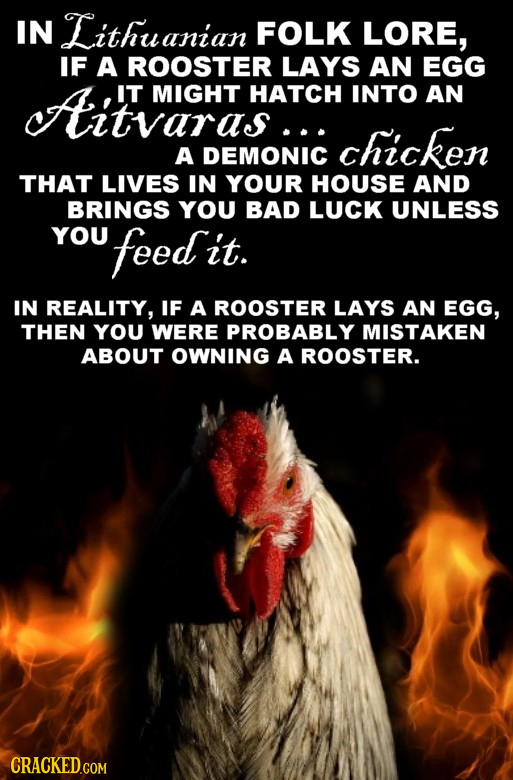 IN Lithuanian FOLK LORE, IF A ROOSTER LAYS AN EGG cAitvaraAcH IT MIGHT HATCH INTO AN chicken A DEMONIC THAT LIVES IN YOUR HOUSE AND BRINGS YOU BAD LUC