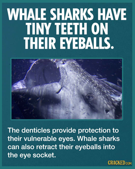 7 Unbelievable Shark Facts You Simply Must Believe