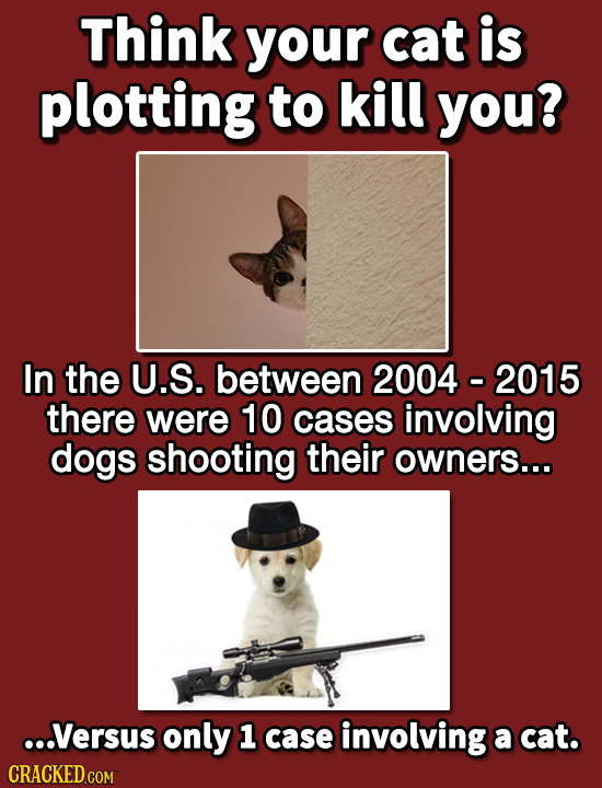 Think your cat is plotting to kill you? In the U.S. between 2004 - 2015 there were 10 cases involving dogs shooting their owners... ...Versus only 1 c