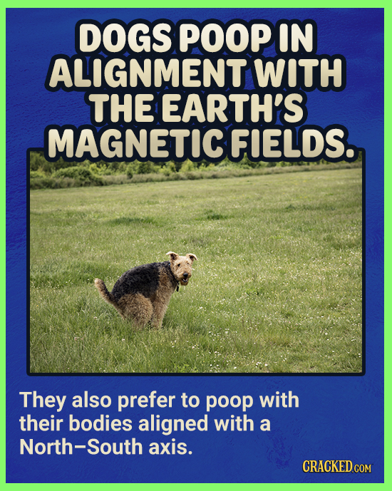 DOGS POOP IN ALIGNMENT WITH THE EARTH'S MAGNETICFIELDS. They also prefer to poop with their bodies aligned with a North-South axis. CRACKED.COM