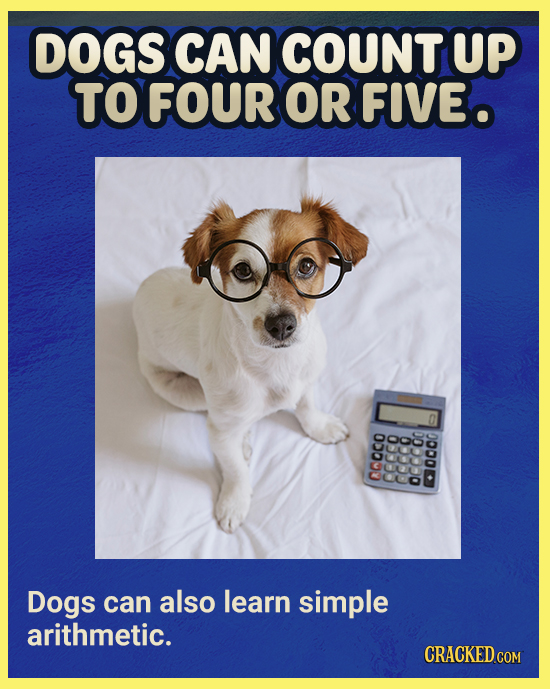 DOGS CAN COUNT UP TOFOUR OR FIVEO 00000 S Dogs can also learn simple arithmetic. COM