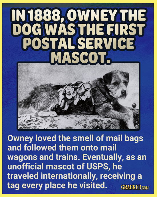 IN 1888, OWNEY THE DOG WAS THE FIRST POSTAL SERVICE MASCOTo Owney loved the smell of mail bags and followed them onto mail wagons and trains. Eventual