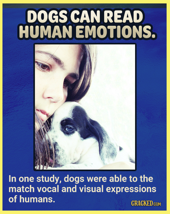 DOGS CAN READ HUMAN EMOTIONS. In one study, dogs were able to the match vocal and visual expressions of humans. CRACKEDCON COM