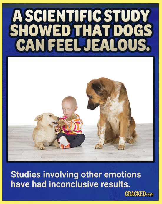 A SCIENTIFIC STUDY SHOWED THAT DOGS CAN FEEL JEALOUS. Studies involving other emotions have had inconclusive results.