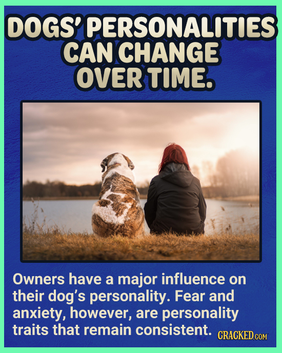 DOGS' PERSONALITIES CAN CHANGE OVER TIME Owners have a major influence on their dog's personality. Fear and anxiety, however, are personality traits t
