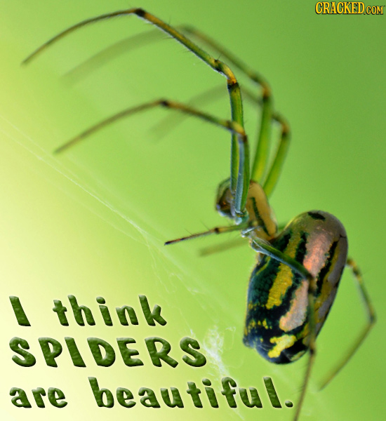 think SPIDERS are beautiful.