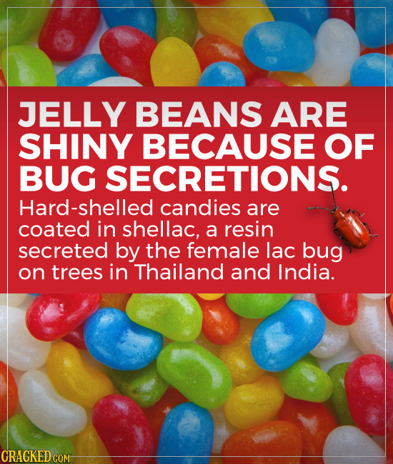 JELLY BEANS ARE SHINY BECAUSE OF BUG SECRETIONS. Hard-shelled candies are coated in shellac, a resin secreted by the female lac bug on trees in Thaila