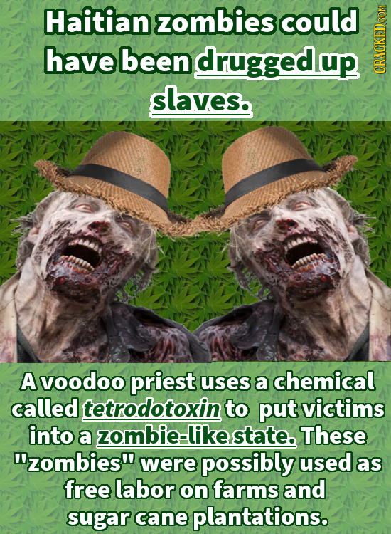 Haitian zombies could have been druggedup GRAuN slaves. A voodoo priest uses a chemical called tetrodotoxin to put victims into a zombie-likestate. Th