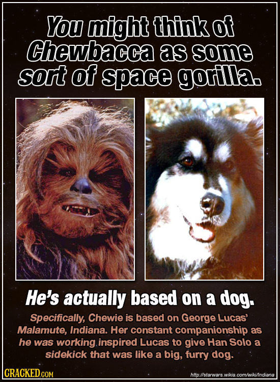 You might think of Chewbacca as some sort of space gorilla. He's actually based on a dog. Specifically, Chewie is based on George Lucas' Malamute, Ind
