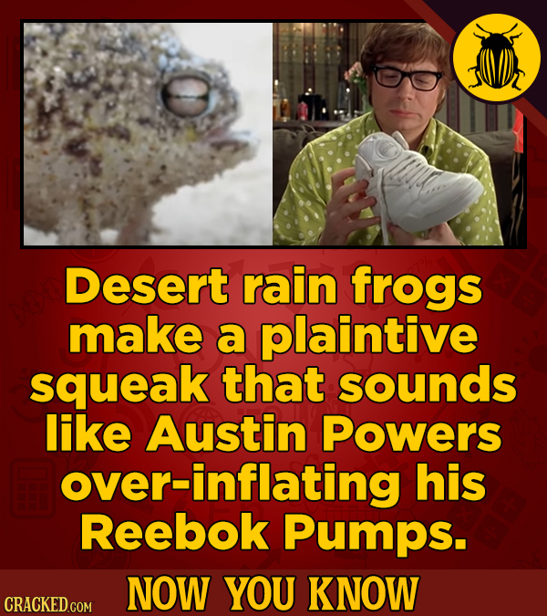 Desert rain frogs make a plaintive squeak that sounds like Austin Powers over-inflating his Reebok Pumps. NOW YOU KNOW CRACKED COM