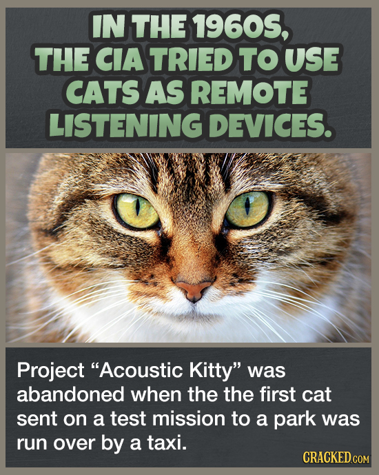 IN THE 19605, THE CIA TRIED TO USE CATS AS REMOTE LISTENING DEVICES. Project Acoustic Kitty was abandoned when the the first cat sent on a test miss