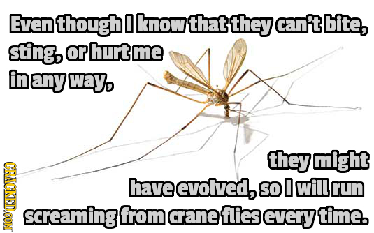 Even though 0 know that they can't bite, sting, or hurt me in any wayo they might CRAGKED.OON have evolved, SO 0 will rUN screaming{ from crane flies