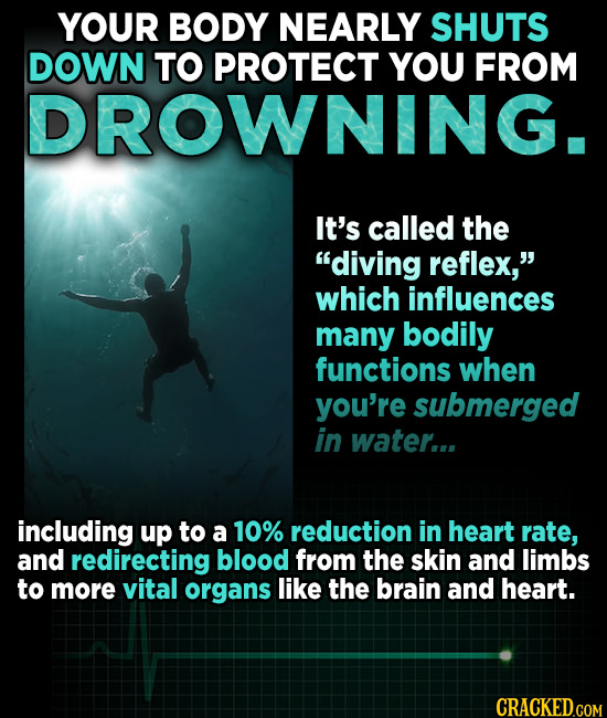 YOUR BODY NEARLY SHUTS DOWN TO PROTECT YOU FROM DROWNING. It's called the diving reflex, which influences many bodily functions when you're submerge