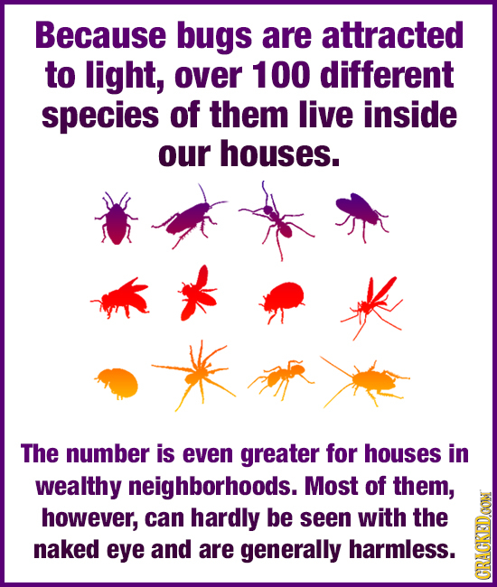 Because bugs are attracted to light, over 100 different species of them live inside our houses. The number is even greater for houses in wealthy neigh