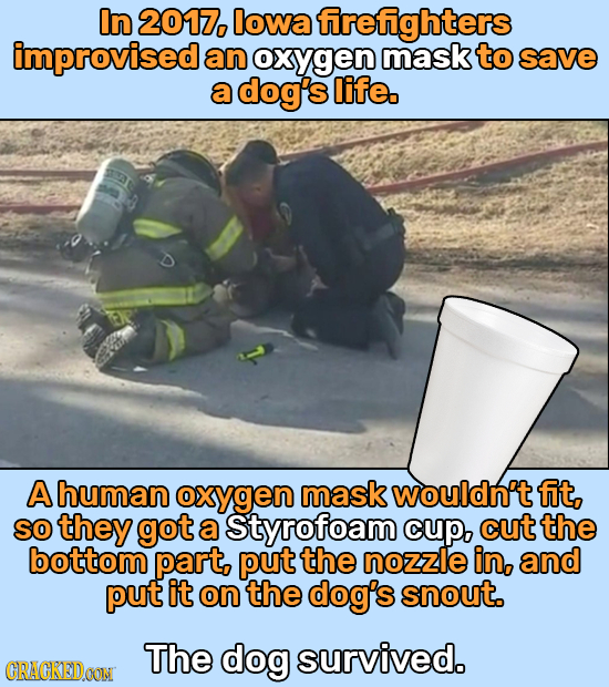 In 2017, lowa frefighters improvised an oxygen mask to save a dog's life. A human oxygen maskwouldn't fit, SO they got a Styrofoam cup, cut the bottom