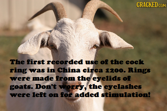 CRACKED The first recorded use of the cock ring was in China circa 1200. Rings were made from the eyelids of goats. Don't worry, the eyelashes were le