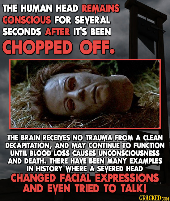 THE HUMAN HEAD REMAINS CONSCIOUS FOR SEVERAL SECONDS AFTER IT'S BEEN CHOPPED OFF. THE BRAIN RECEIVES NO TRAUMA FROM A CLEAN DECAPITATION, AND MAY CONT