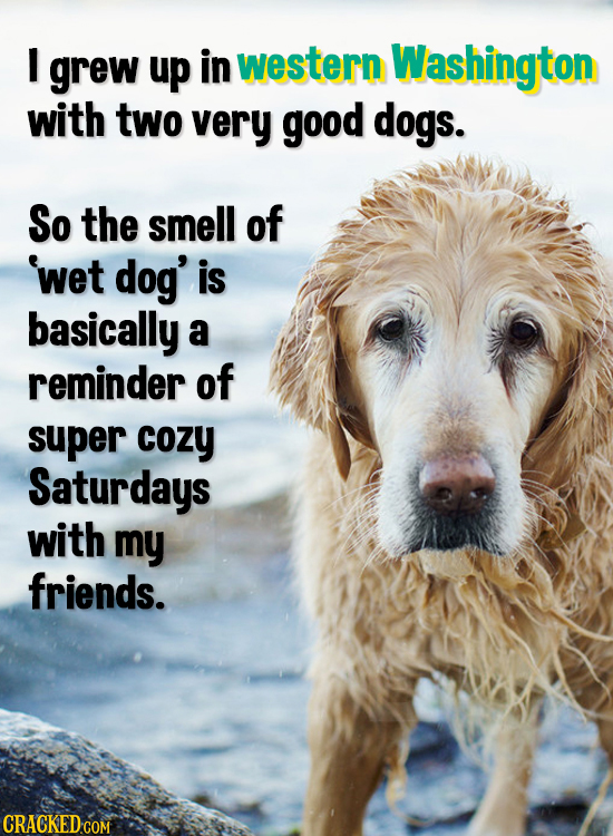 I grew up in western Washington with two very good dogs. So the smell of wet dog' is basically a reminder of super cozy Saturdays with my friends. CRA