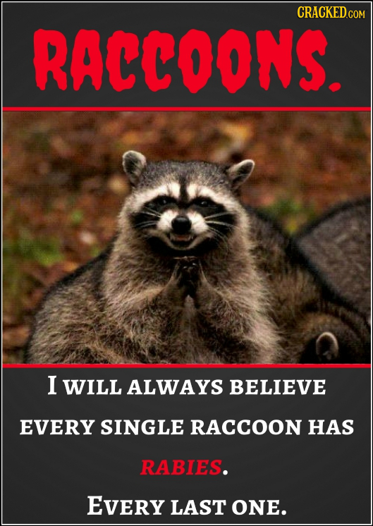 CRACKED RACCOONS I WILL ALWAYS BELIEVE EVERY SINGLE RACCOON HAS RABIES. EVery LAST ONE.